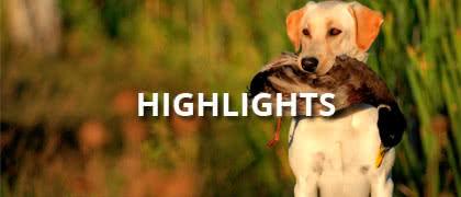 Alles für den Hund-Highlights