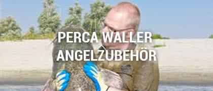Perca Waller Angelzubehör
