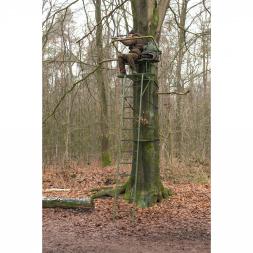Baumsitz Grober Keiler