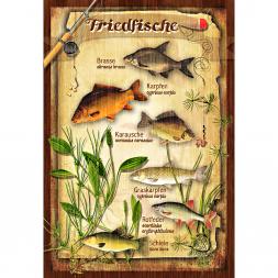 Blechschild Friedfische