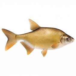 Deko-Fisch Brasse