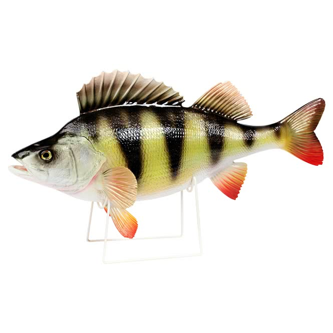 Deko fisch barsch 34 cm g nstig kaufen askari jagd shop for Fisch barsch