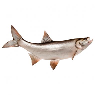 Deko-Fisch Rapfen