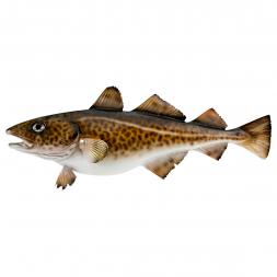 Deco-Fish cod 32 cm