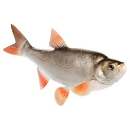 Decorative fish Aaland
