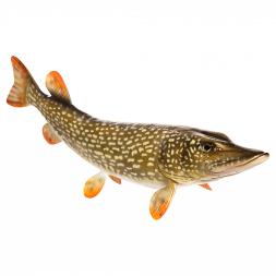 Decorative fish pike